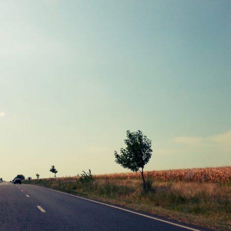copaci pe drum