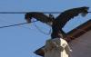 Vulturul cu bec în gură chiar este o faptă bună